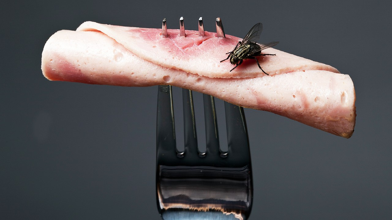 How To Control Flying Insects Around Food